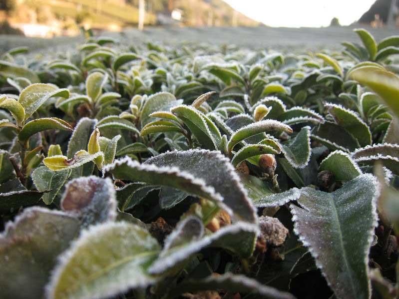 Severe drought - Kerala harsh Frost